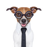 沉默寡言的企业狗 免版税库存图片