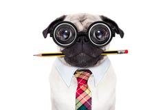 沉默寡言的疯狂的狗 免版税库存图片