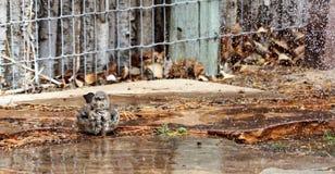 沐浴在喷水隆头的一弯曲的票据thrasher的照片 库存图片