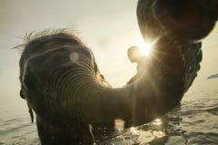沐浴大象在泰国的海湾 免版税库存照片