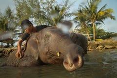 沐浴大象在泰国的海湾 免版税库存图片