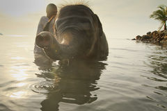 沐浴大象在海运在泰国 库存图片