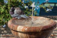 沐浴在喷泉 库存图片