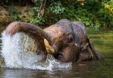 沐浴在热带湖的大象 免版税库存图片