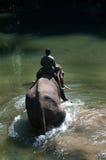 沐浴大象 图库摄影