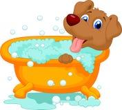 沐浴时间的狗 免版税库存照片