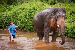 沐浴elefant mahout, Khao Sok圣所,泰国 免版税库存图片
