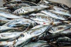 沙丁鱼在梅尔卡多dos的Lavradores或市场鱼大厅里工作者 免版税库存照片