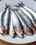 沙丁鱼在白色板材关闭  免版税库存照片