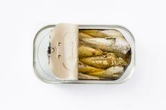 沙丁鱼在白色背景能保存隔绝 免版税库存照片