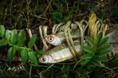 沙丁鱼鱼装饰 免版税库存照片