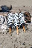 沙丁鱼 库存照片