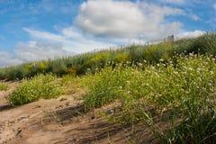 沙丘保护在一个海滩测量在爱尔兰的西方的Lahinch 免版税库存图片