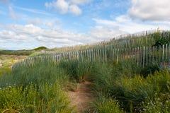 沙丘保护在一个海滩测量在爱尔兰的西方的Lahinch 免版税库存照片