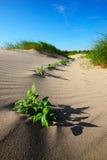 沙丘动态上限沙子 免版税图库摄影