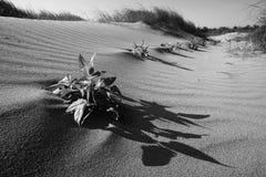 沙丘动态上限沙子 免版税库存照片