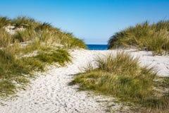沙丘向Darss半岛的,德国波罗的海 免版税库存照片
