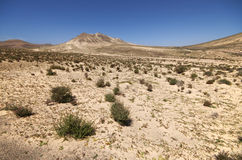 沙丘和山在Sotavento附近在Jandia peninsul靠岸 免版税图库摄影