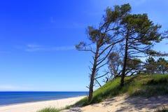 沙丘和杉树在一个海滩沿波罗的海支持 免版税库存图片