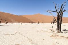 沙丘和树在纳米比亚沙漠 库存照片