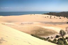 沙丘和森林在Bazaruto海岛上 免版税库存图片