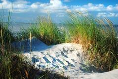 沙丘和沙丘草 库存照片
