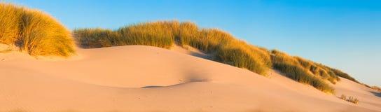 沙丘和草在海滩-全景 库存照片