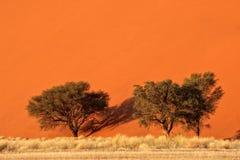 沙丘和结构树 免版税库存照片