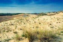 沙丘在立陶宛 免版税库存图片