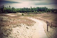 沙丘在立陶宛 免版税图库摄影
