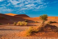沙丘在纳米比亚沙漠在黎明, roadtrip在美妙的Namib Naukluft国家公园,旅行目的地在纳米比亚, Afr 图库摄影