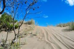 沙丘在阿根廷 库存照片