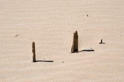 沙丘展望期kosa kurshskaya俄国沙子跨步舒展 图库摄影
