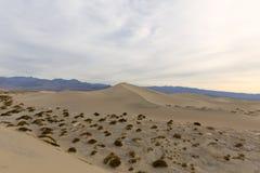 沙丘平面的豆科灌木沙子 免版税图库摄影