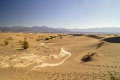 沙丘平面的豆科灌木沙子 免版税库存图片