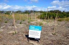 沙丘恢复在英属黄金海岸昆士兰澳大利亚 库存图片