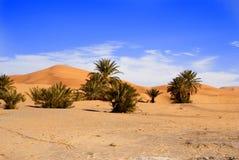 沙丘撒哈拉大沙漠 免版税库存图片