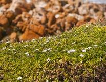 沙丘植物群秀丽  库存照片