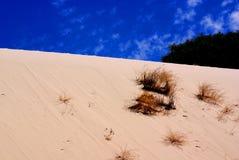 沙丘沙子随风飘飞的雪 库存图片
