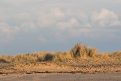 沙丘滨草草边界 荒岛海岸背景im 免版税库存图片