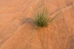 沙丘特写镜头在日落的迪拜沙漠 库存图片