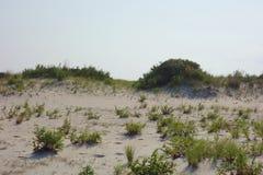 沙丘生态系 库存图片