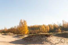 沙丘看法在10月早晨 免版税图库摄影
