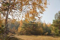 沙丘看法在10月早晨 图库摄影