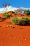 沙丘红色 库存照片
