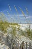 沙丘范围燕麦海运 免版税库存图片