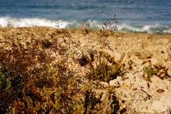 沙丘草沙子海运 图库摄影