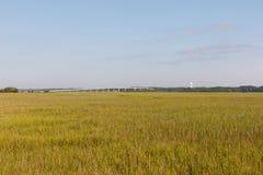 沙丘草的领域在海岸的 库存图片