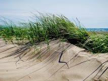 沙丘草,黑岩石沙子 库存图片