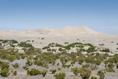 沙丘豆科灌木沙子 免版税库存图片